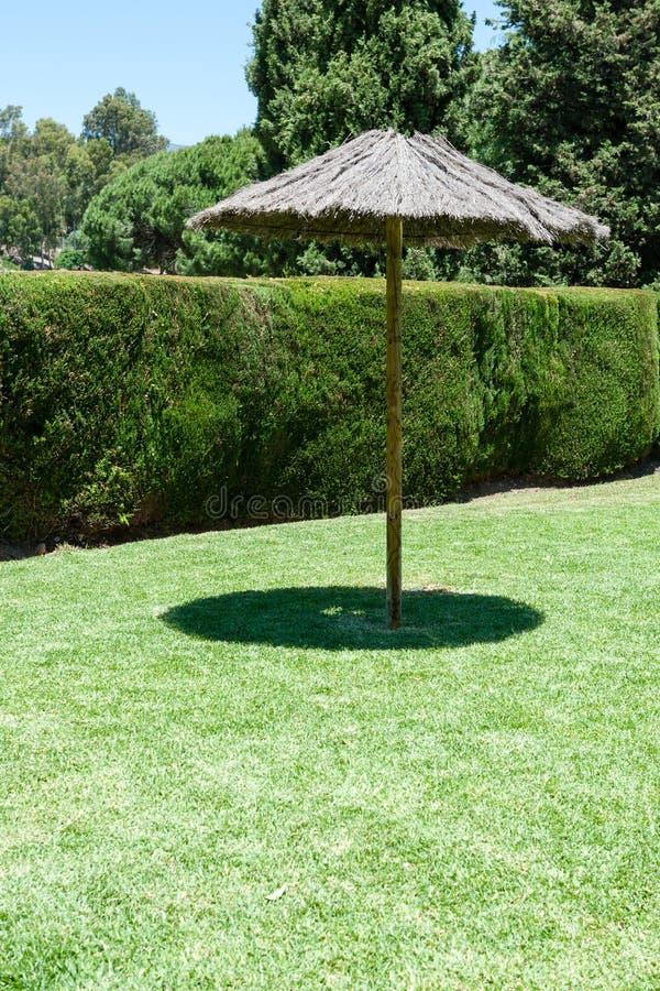 在绿色草坪的孤立树荫伞 库存图片