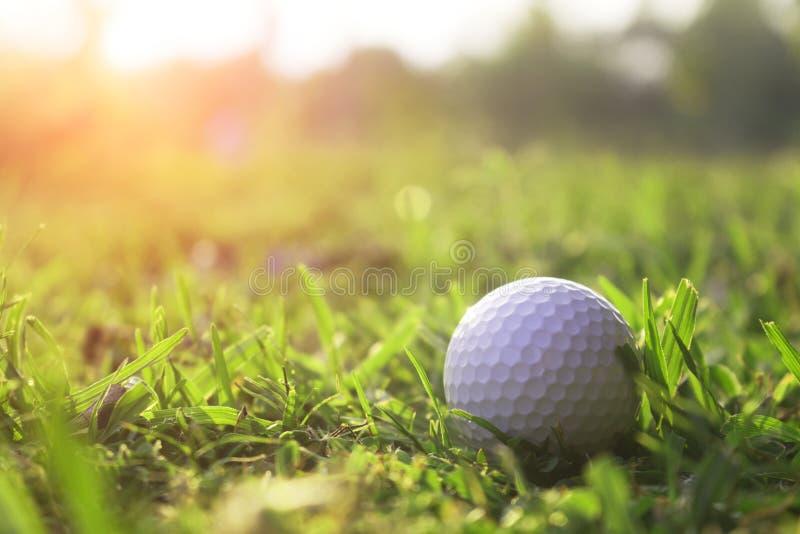 在绿色草坪的高尔夫球在美好的高尔夫球场 免版税库存照片