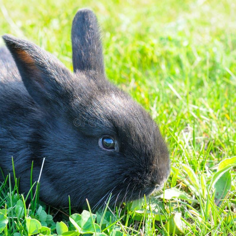 在绿色草坪背景的小的兔子 免版税库存图片