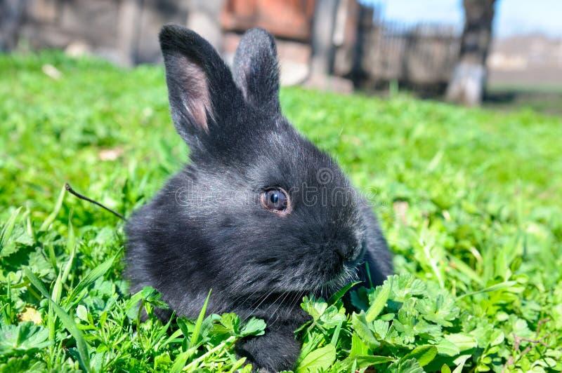 在绿色草坪背景的小的兔子 免版税图库摄影