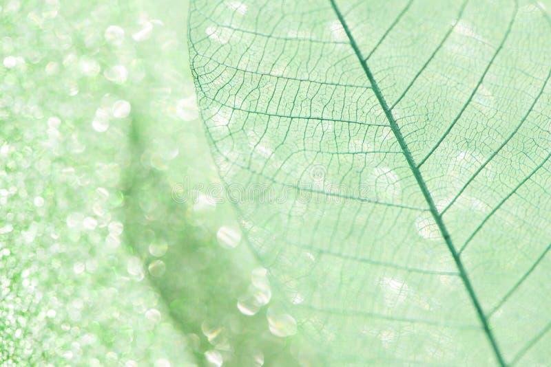 在绿色闪闪发光背景的美丽的最基本的叶子特写镜头  免版税图库摄影