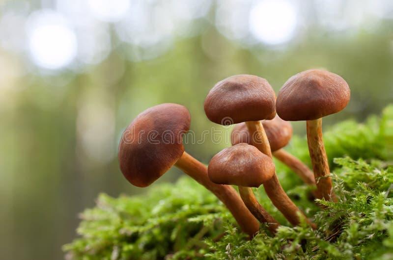 在绿色青苔的蘑菇 免版税图库摄影