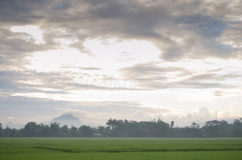 在绿色领域上的独特的云彩形式 免版税库存图片
