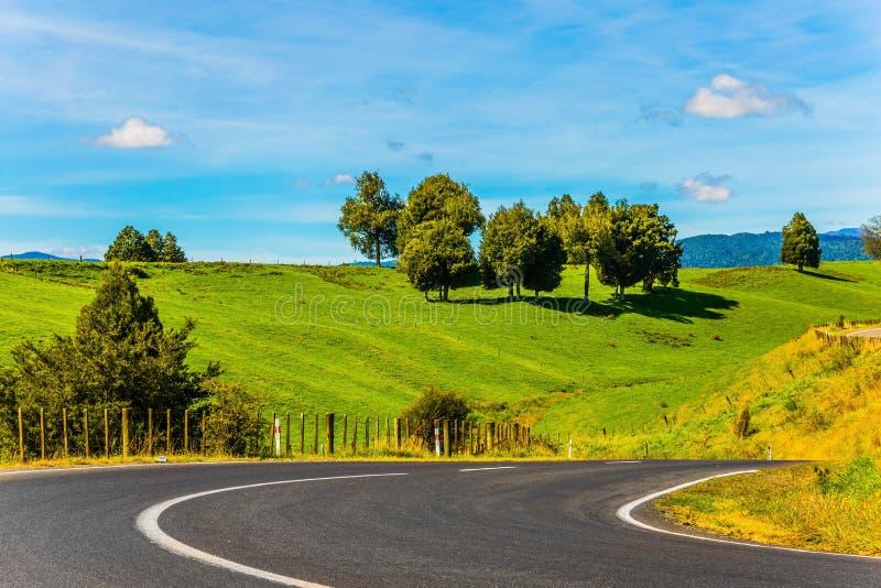 在绿色领域中的壮观的路 在北岛,新西兰的夏天晴朗的早晨 概念的活跃和 库存图片