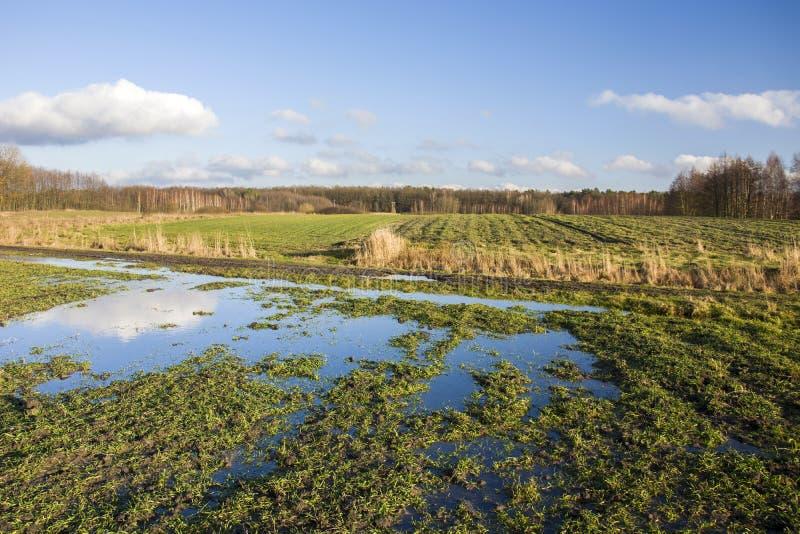 在绿色领域和森林的水坑 库存图片