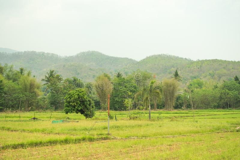 在绿色领域和美好的米领域 免版税图库摄影
