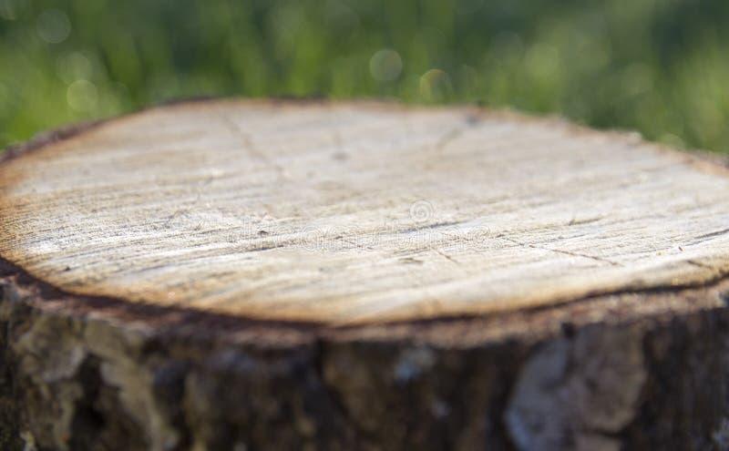 在绿色bokeh草背景立场树桩树背景  库存图片