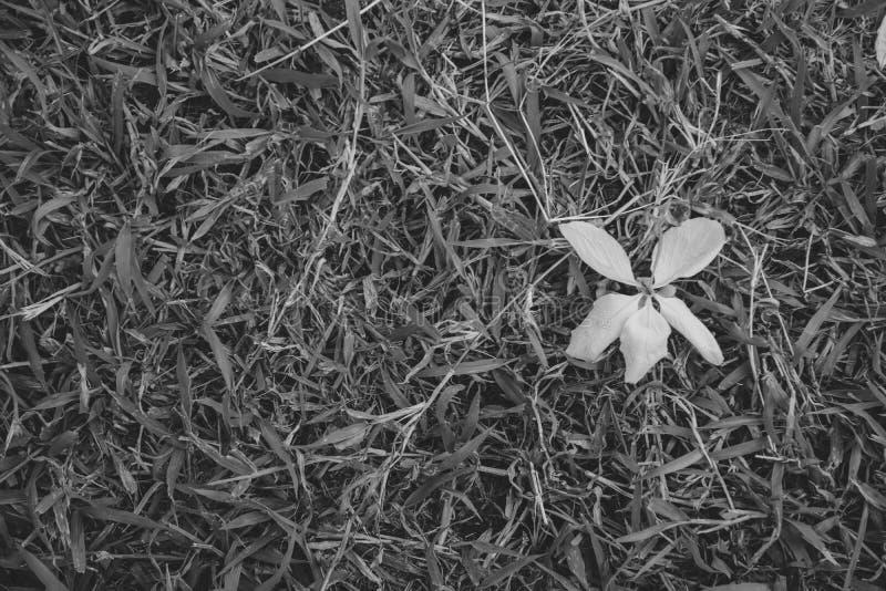 在绿草地板上的黄色花有被弄脏的背景 免版税库存图片
