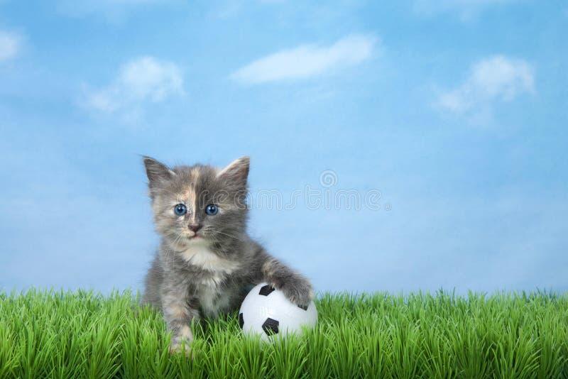 在绿草的小猫与足球 免版税库存图片