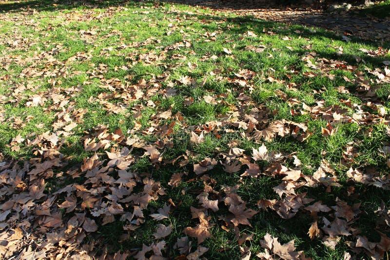 在绿草的干燥叶子在冬天 库存照片
