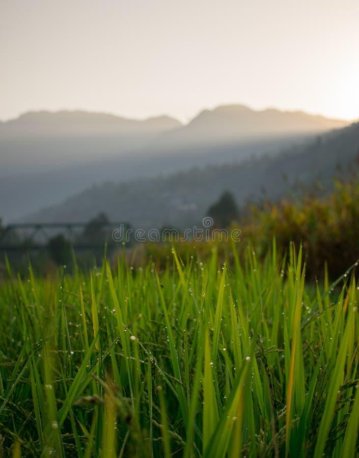 在绿草的早晨露水射击日出bokeh 图库摄影
