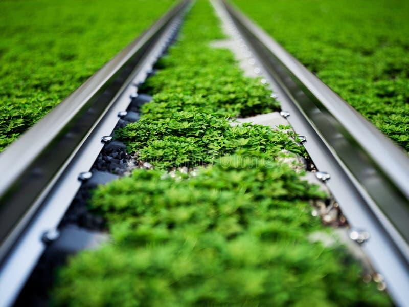在绿草的铁路 向量例证