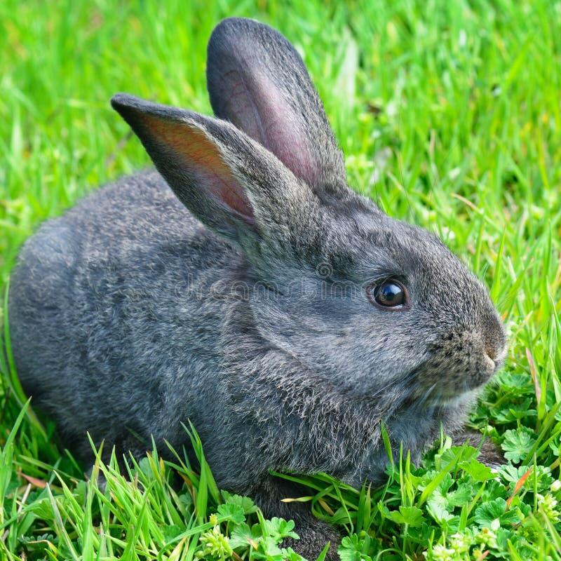 在绿草背景的小的兔子 免版税库存图片