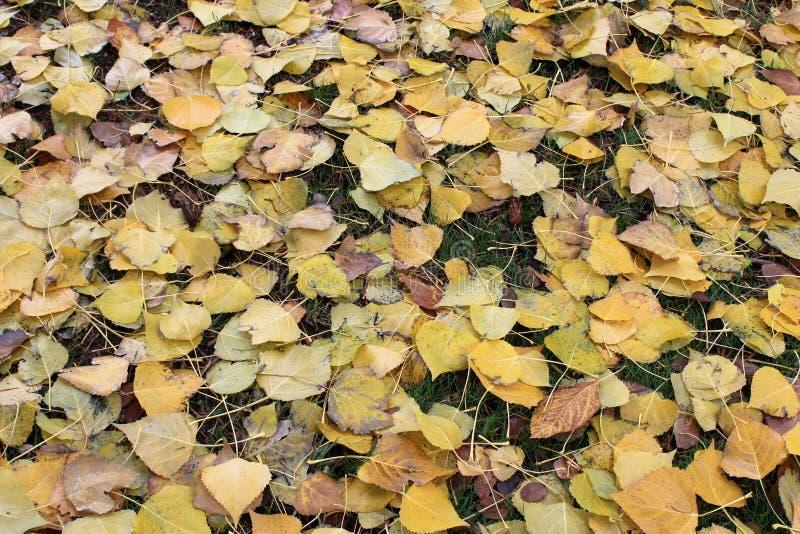 在绿草顶部的下落的黄色叶子 免版税库存照片