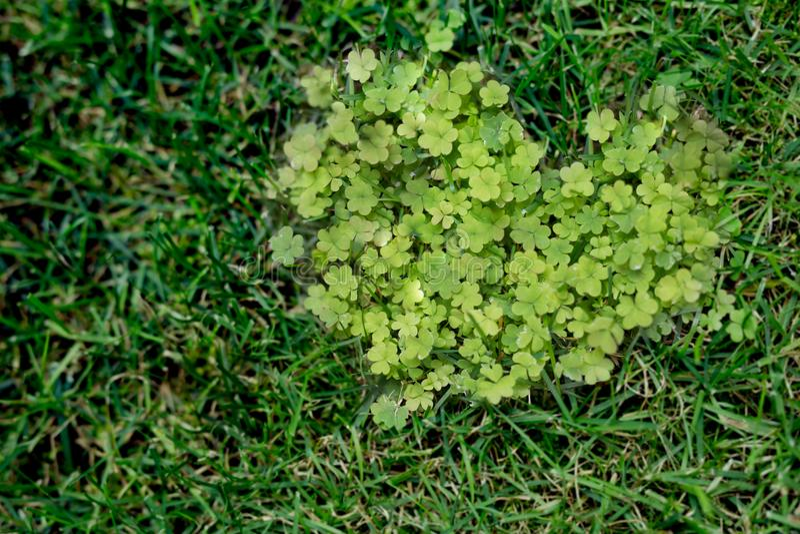 在绿草,抽象爱背景的心脏形状 库存图片