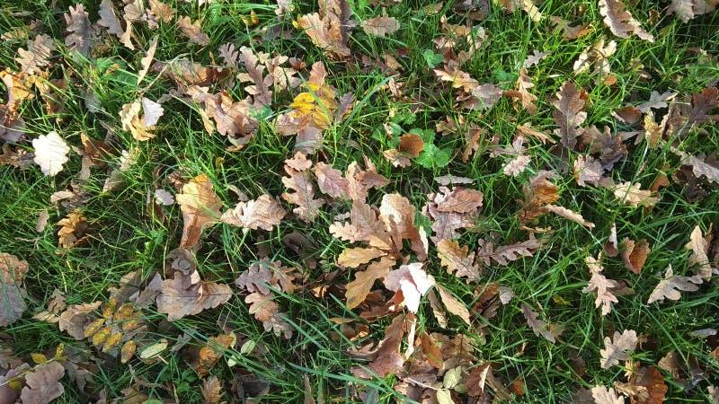 在绿草,明亮的五颜六色的秋天背景的落叶 免版税图库摄影