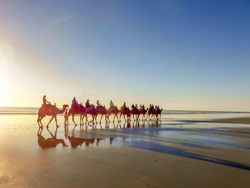 在缆绳海滩,布鲁姆,西澳州的骆驼乘驾 库存图片