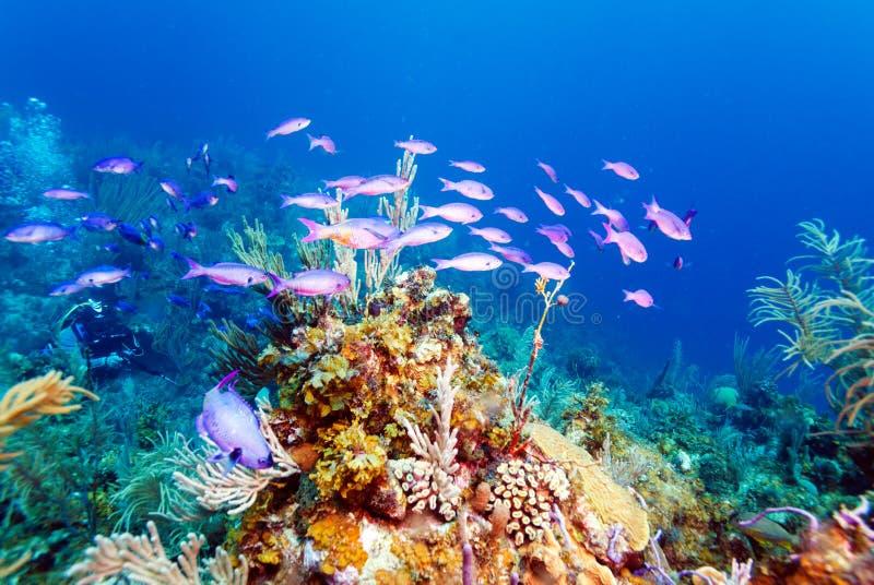 在缓慢地Cayo附近的珊瑚礁 免版税库存照片