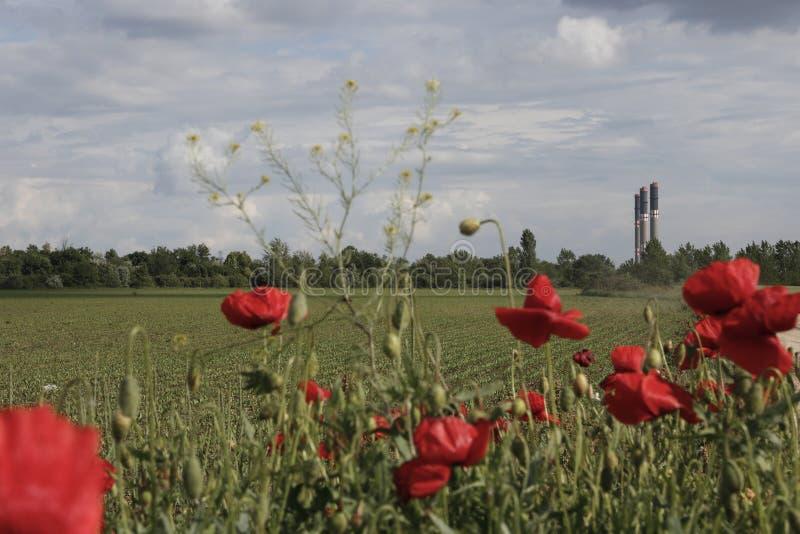 在罂粟的种子花和多云风景的遥远的工厂烟囱 免版税库存照片
