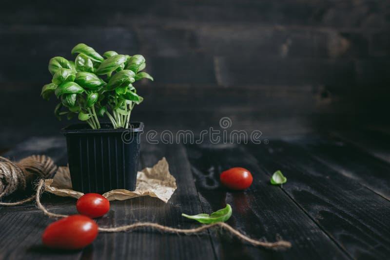 在罐和蕃茄的新鲜的蓬蒿在与拷贝空间的木背景 免版税库存图片