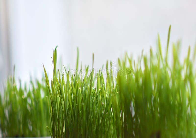 在罐在窗台,复活节彩蛋的绿草 免版税库存图片