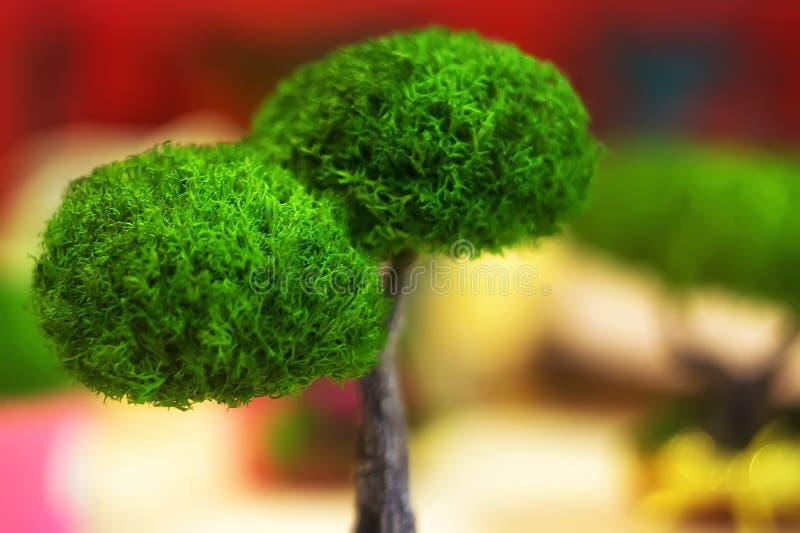 在罐的一棵小绿色树 图库摄影