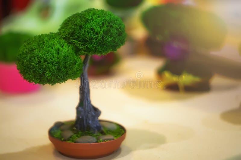 在罐的一棵小绿色树 免版税库存照片