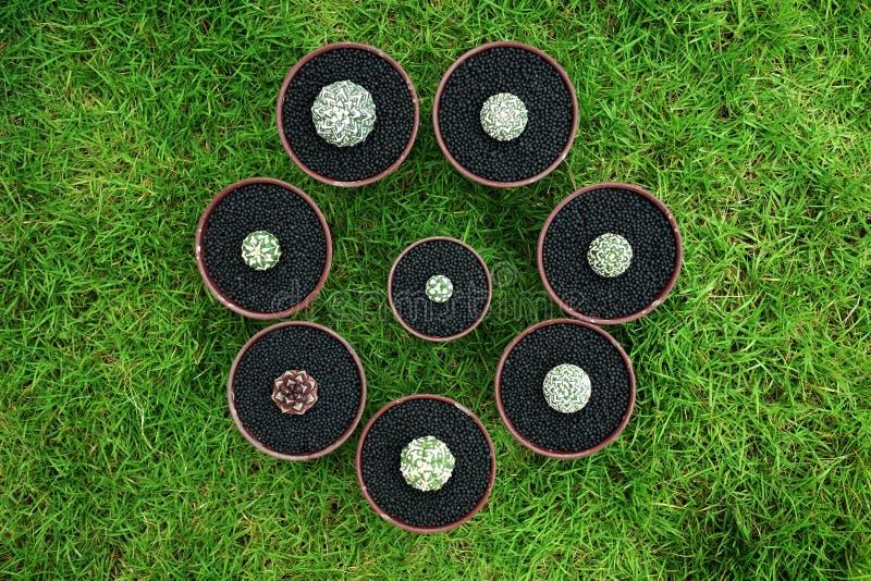 在罐的各种各样的仙人掌在绿色庭院地面 免版税库存图片