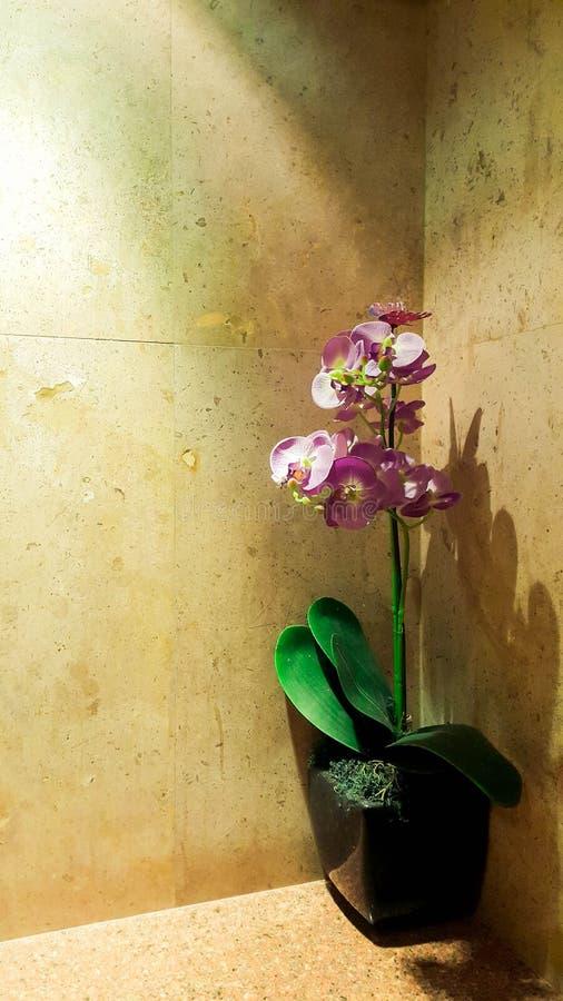 在罐的塑料兰花被安置在灰浆边缘 免版税库存照片