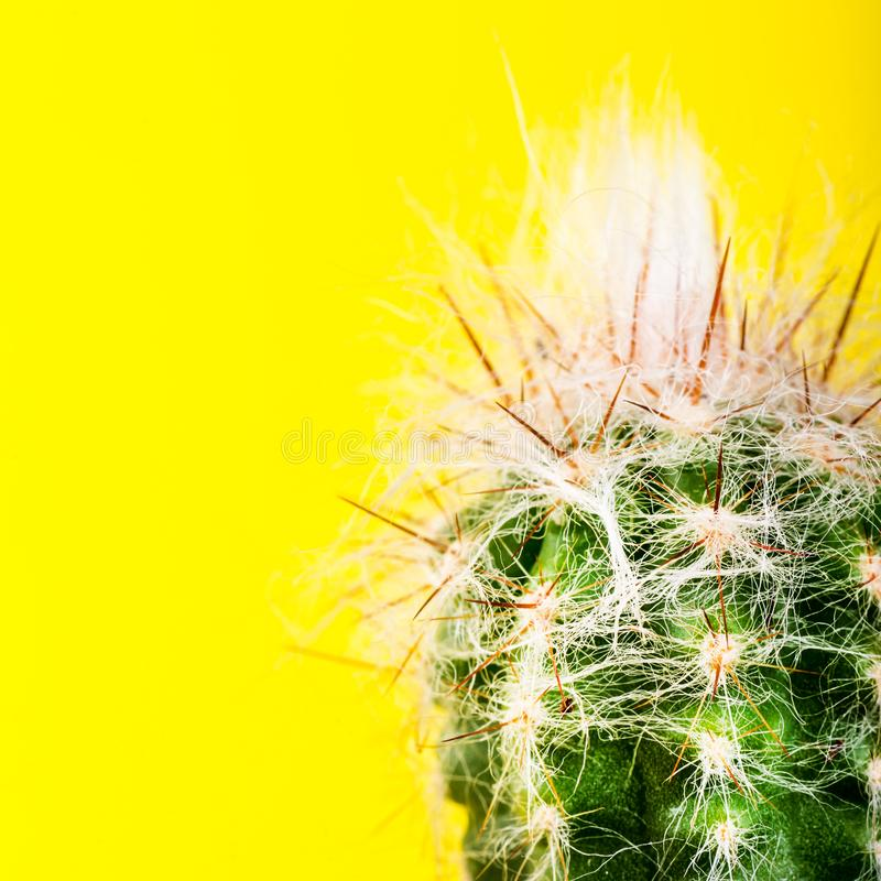 在罐的微小的仙人掌在明亮的霓虹背景 饱和的Imag 免版税库存图片