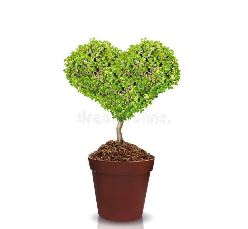 在罐的心脏树 免版税库存图片