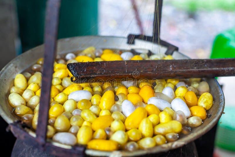 在罐的煮沸白色和黄色桑蚕茧做锡勒 库存图片
