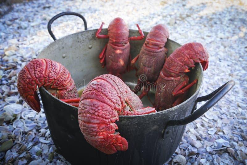 在罐的煮熟的小龙虾 库存照片