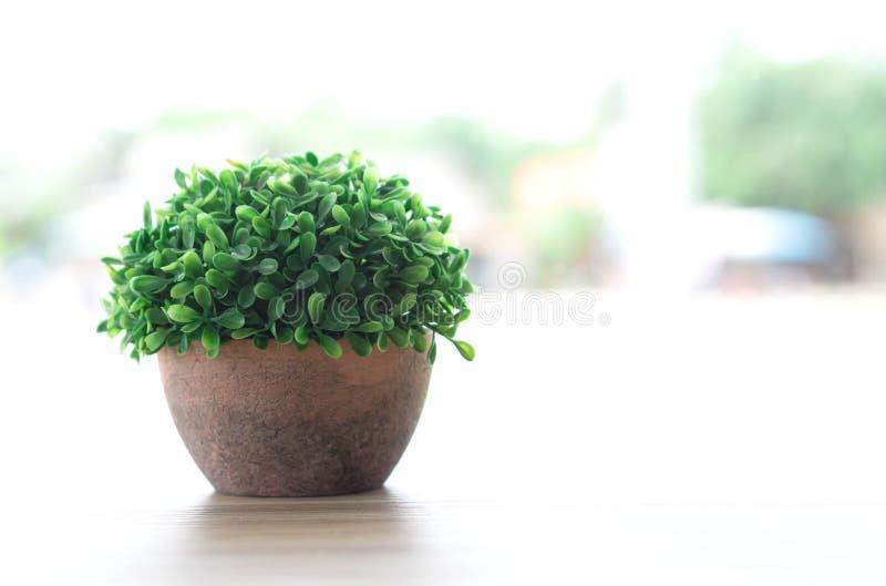 在罐的绿色小树在木桌上在咖啡馆,装饰概念 库存照片