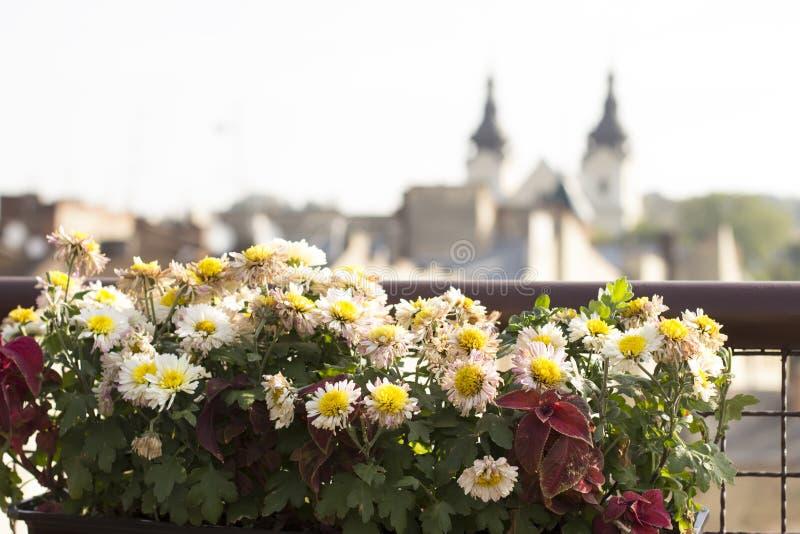 在罐的花在屋顶 免版税库存图片