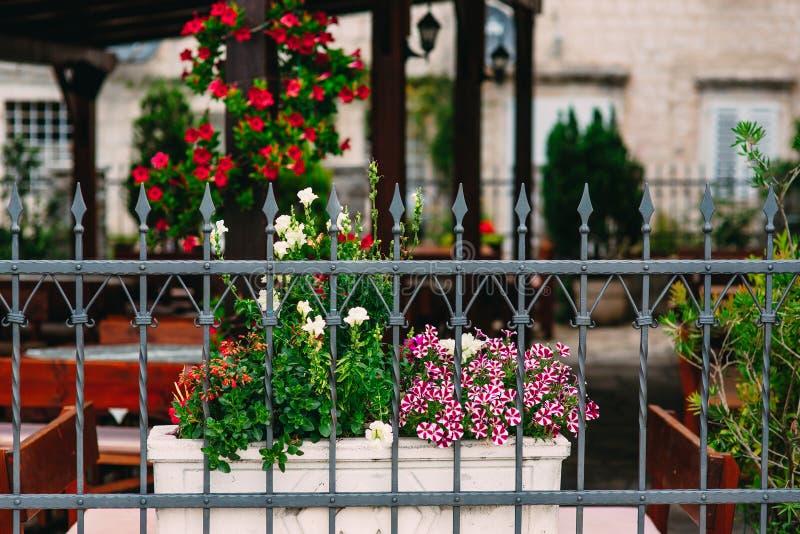 在罐的花在围场是喇叭花和antirrinum 花 库存图片