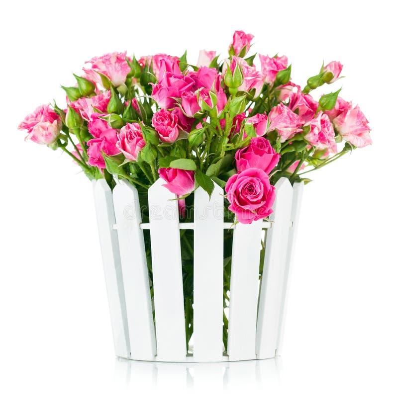 在罐的花束桃红色玫瑰 免版税库存照片