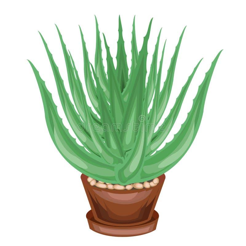 在罐的装饰室内植物被描述 芦荟维拉绿色叶子  裂缝合拢,用于医学 一个好和质朴的爱好 皇族释放例证