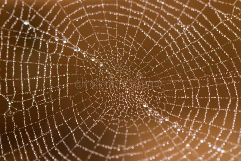 在网的宏观蜘蛛 免版税库存图片