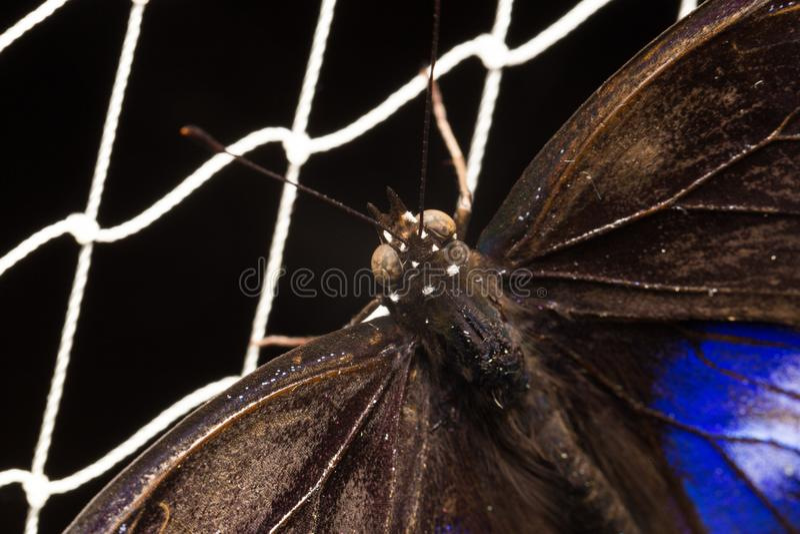 在网的蝴蝶 免版税库存图片