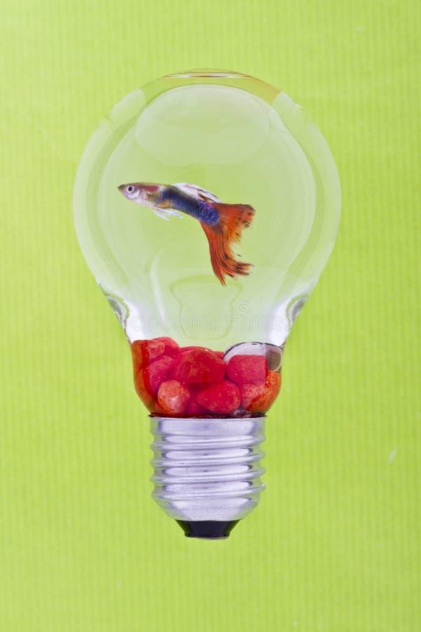 在罕见的鱼缸的五颜六色的鱼 免版税库存照片