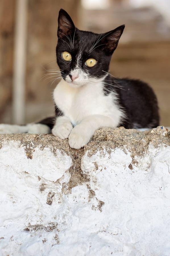 在罗得岛,希腊街道上的一只小的小猫迷路者猫  免版税图库摄影