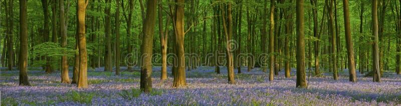 在美丽的会开蓝色钟形花的草木头的黄昏 免版税图库摄影