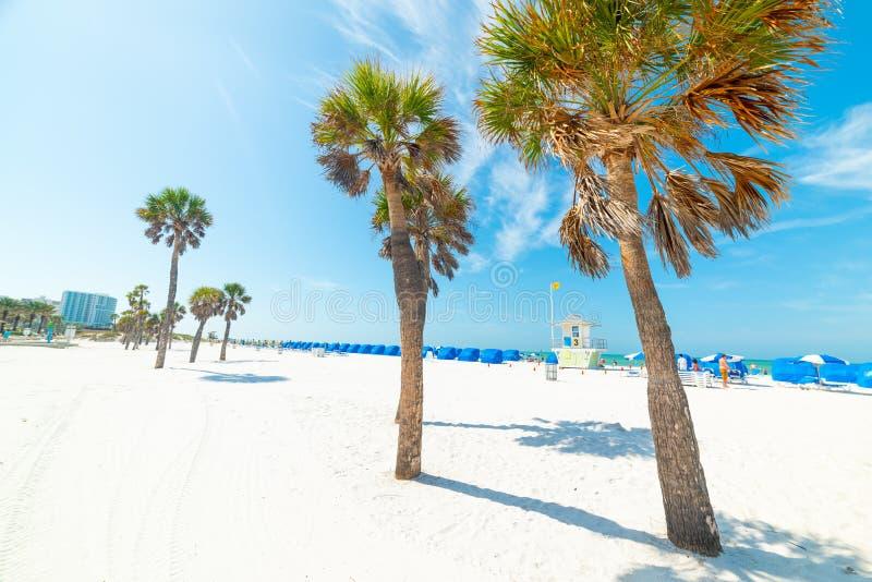 在美丽的克利尔沃特海滩的白色沙子和棕榈树 图库摄影