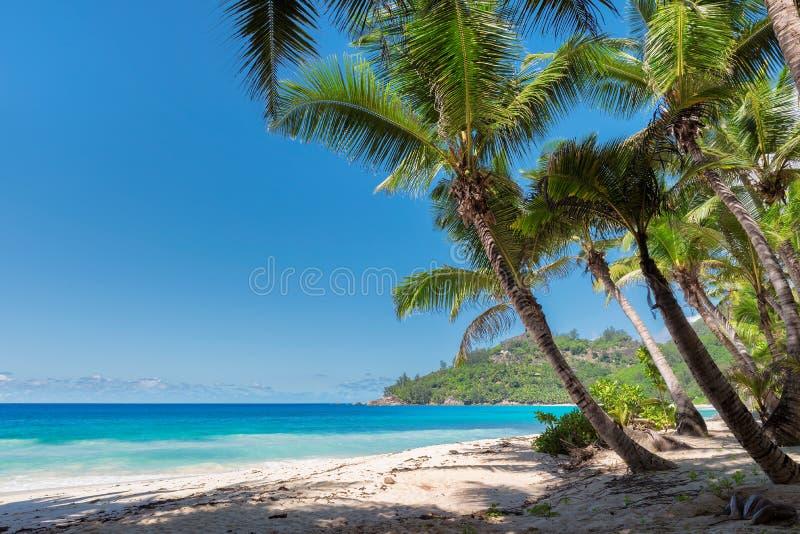 在美丽的塞舌尔群岛海滩的棕榈 免版税库存照片