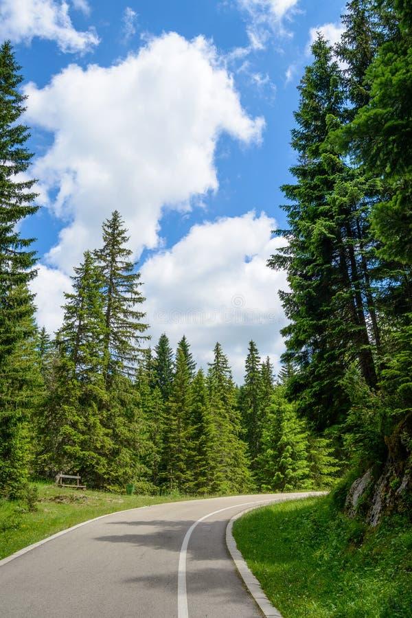 在美丽的森林中的自由路在国家公园杜米托尔国家公园,黑山 库存图片