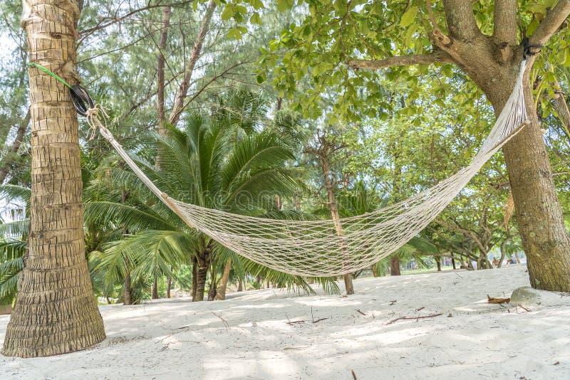 在美丽的热带沙滩和绿色棕榈树,泰国的空的吊床 免版税库存图片