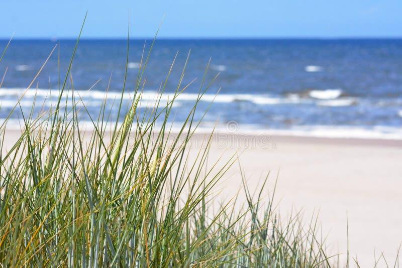 在美丽的白色沙滩和海洋的看法有从沙丘的天空蔚蓝的与草 免版税图库摄影