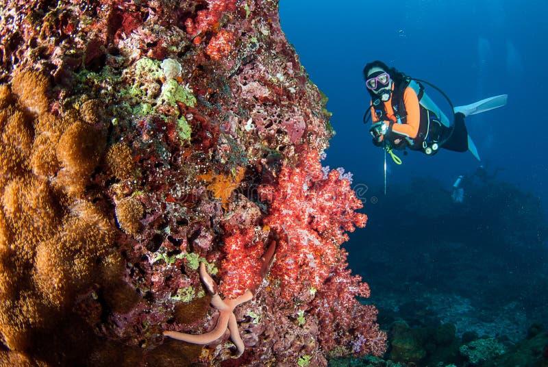 在美丽的软的珊瑚礁的妇女佩戴水肺的潜水在南安达曼,泰国 图库摄影