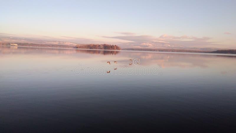 在美丽的鸟云彩之上颜色及早飞行金子早晨本质宜人的平静的反映上升海运一些星期日 库存图片